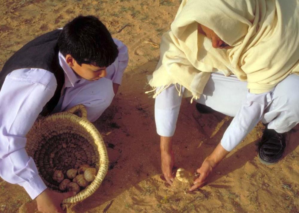 Песчаные трюфели