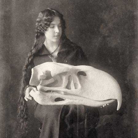 Titanis walleri
