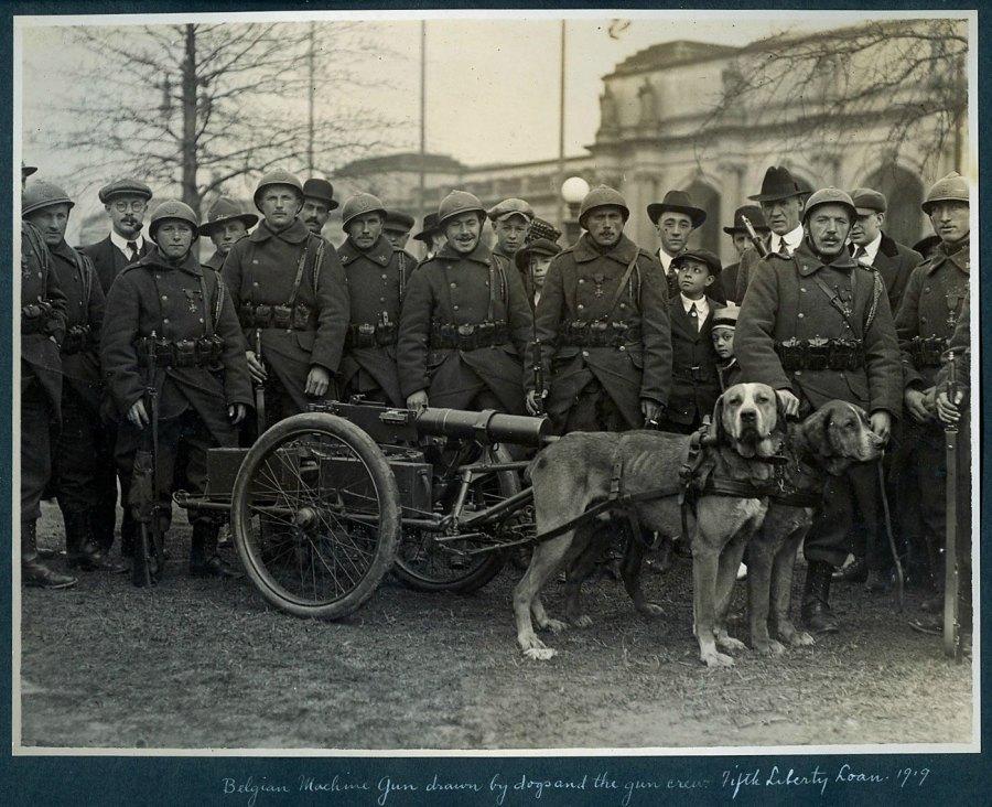 Бельгійські вояки біля собачої кулеметної упряжі.1919