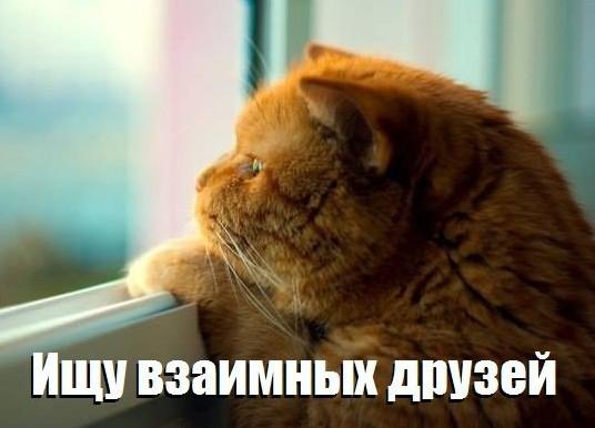 кот дружит