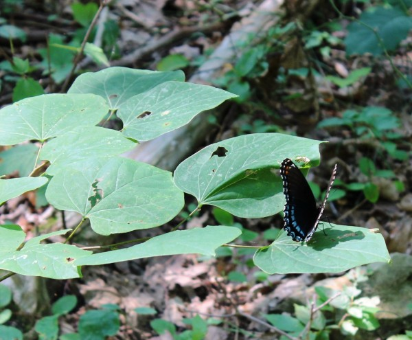 Wildcat Mountain Preserve