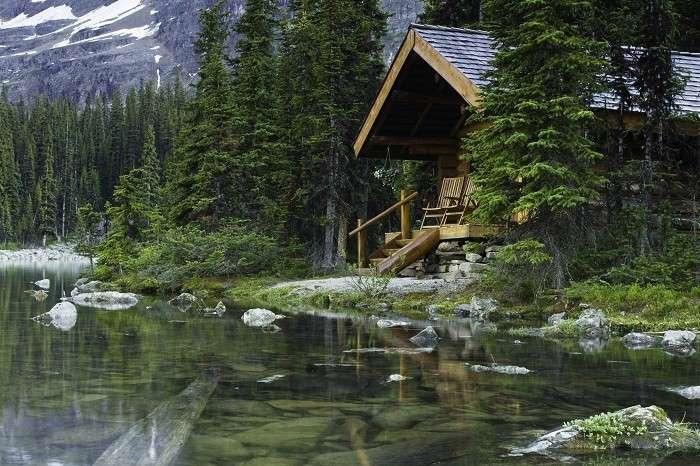Во время отпуска живу в лесу