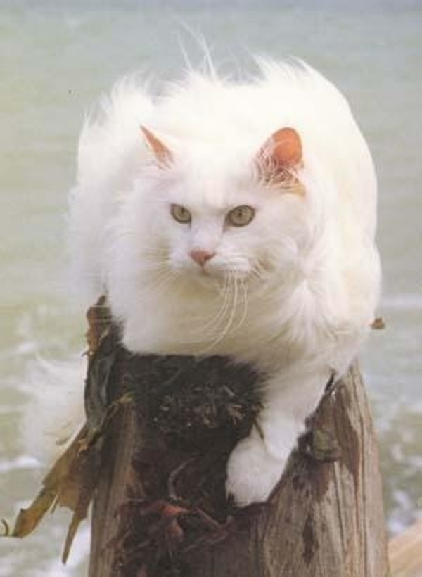Советы по перевоспитанию котов