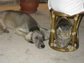 ахат и кот