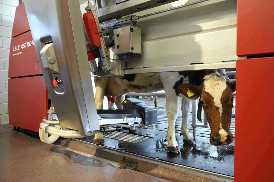 robots-milkers