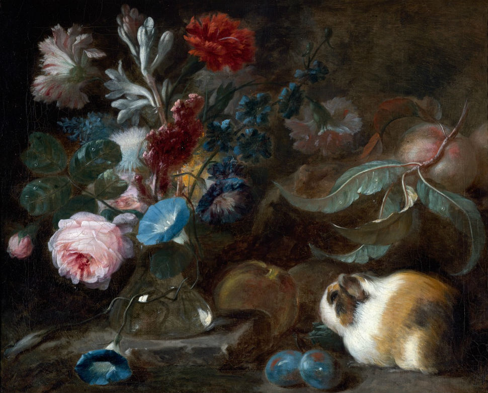 3-Франц Вернер фон Тамм - Натюрморт с морской свинкой цветами и фруктами - 1720-е.jpg