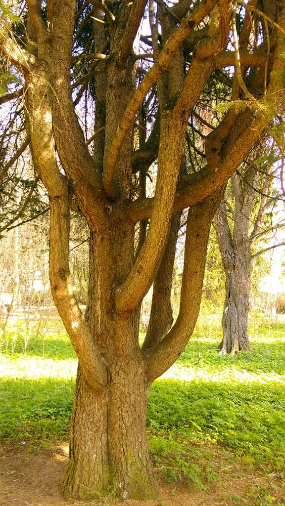 Причудливое дерево напротив главного дома.
