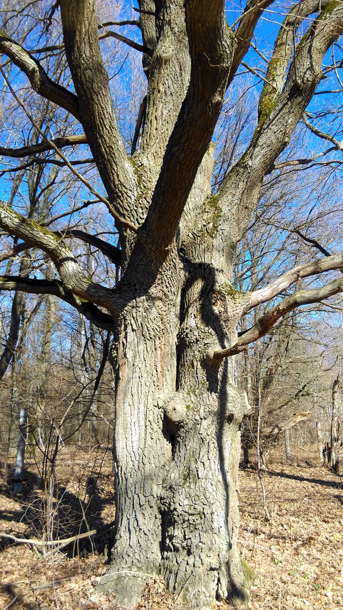 Вдоль забора огораживающего лес с пасекой растут красивые старые деревья