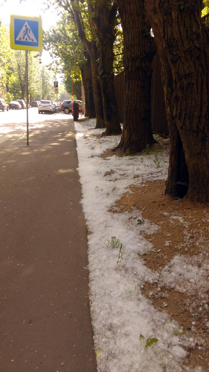 А в Москве все завалило снегом... То есть, конечно, пухом...