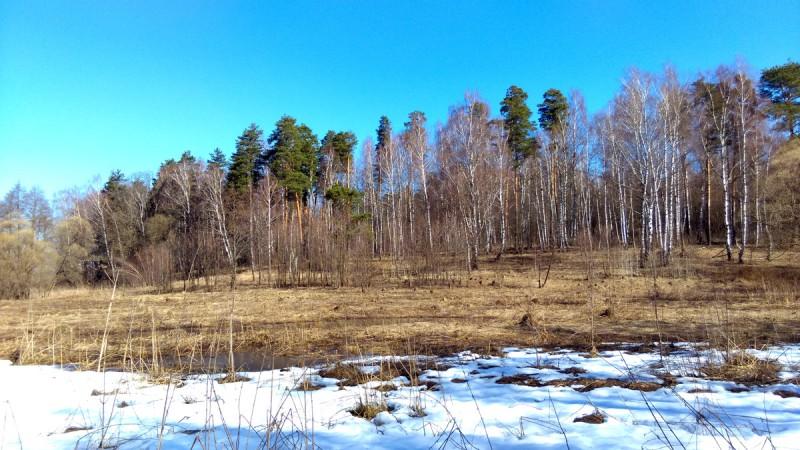 Красивый вид на лес от ручья. Прошел через него забирая вправо.