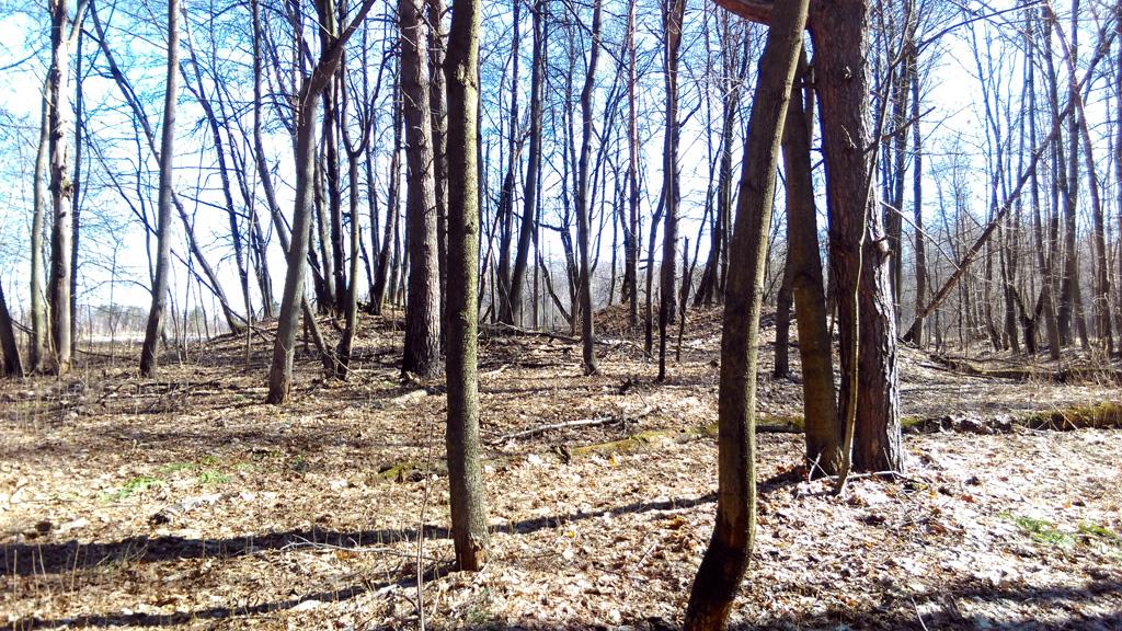 На краю леса расположены Курганы Вятичей.