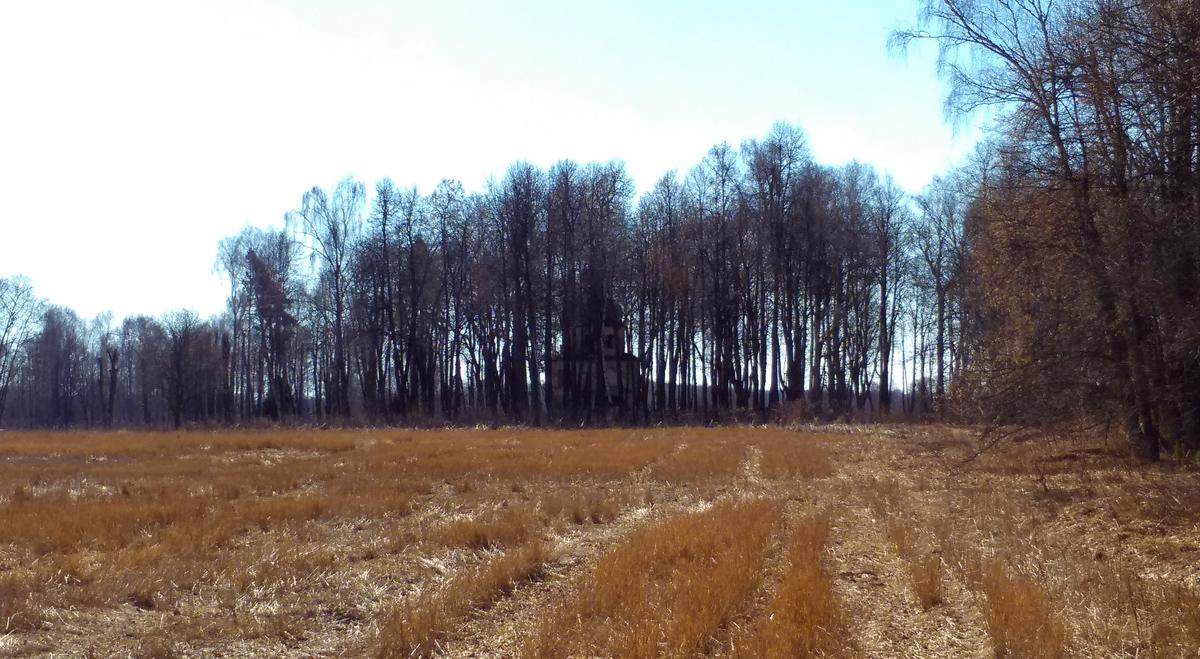 Иду по полю вдоль липовой аллеи и.... В рощице показался силуэт храма. Когда деревья в листве, можно и не заметить.
