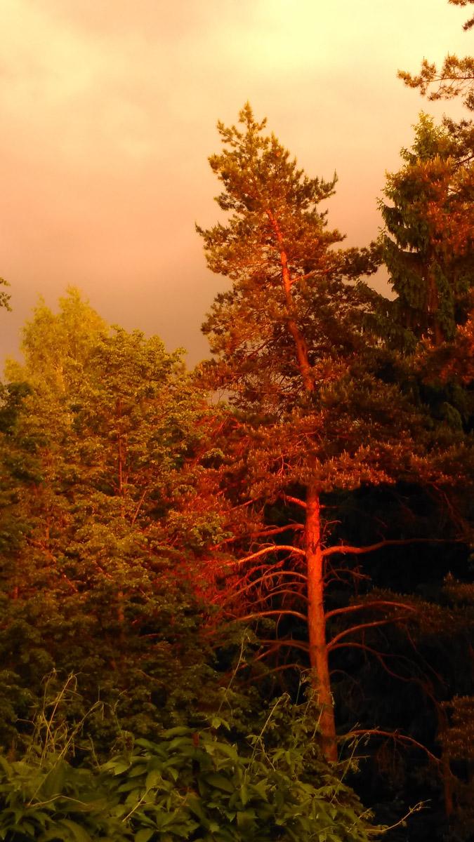 А что бы снять этот закат, я никуда не ездил, просто, вышел вечером из дома в своей усадьбе в Домодедово...