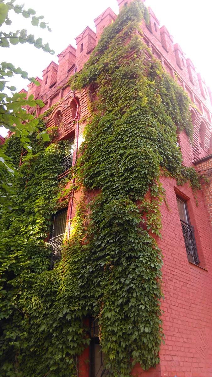 С одной стороны крепостная башня увита диким виноградом... Романтично...