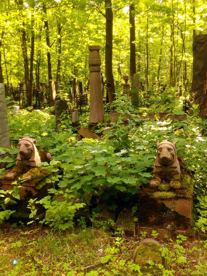 Здесь склеп и вовсе обрушился и зарос молодыми кленами. Только два льва невозмутимо продолжают сидеть на своих местах...