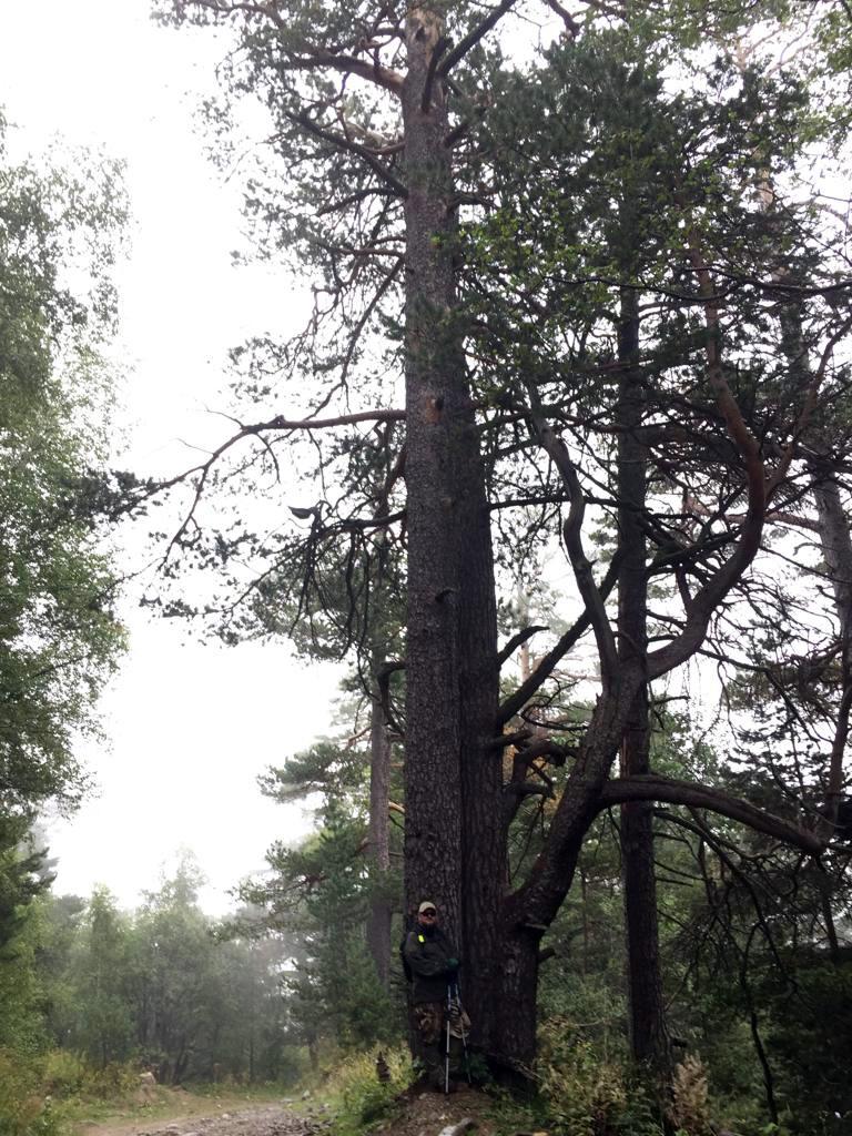 У одного из таких деревьев я позирую...
