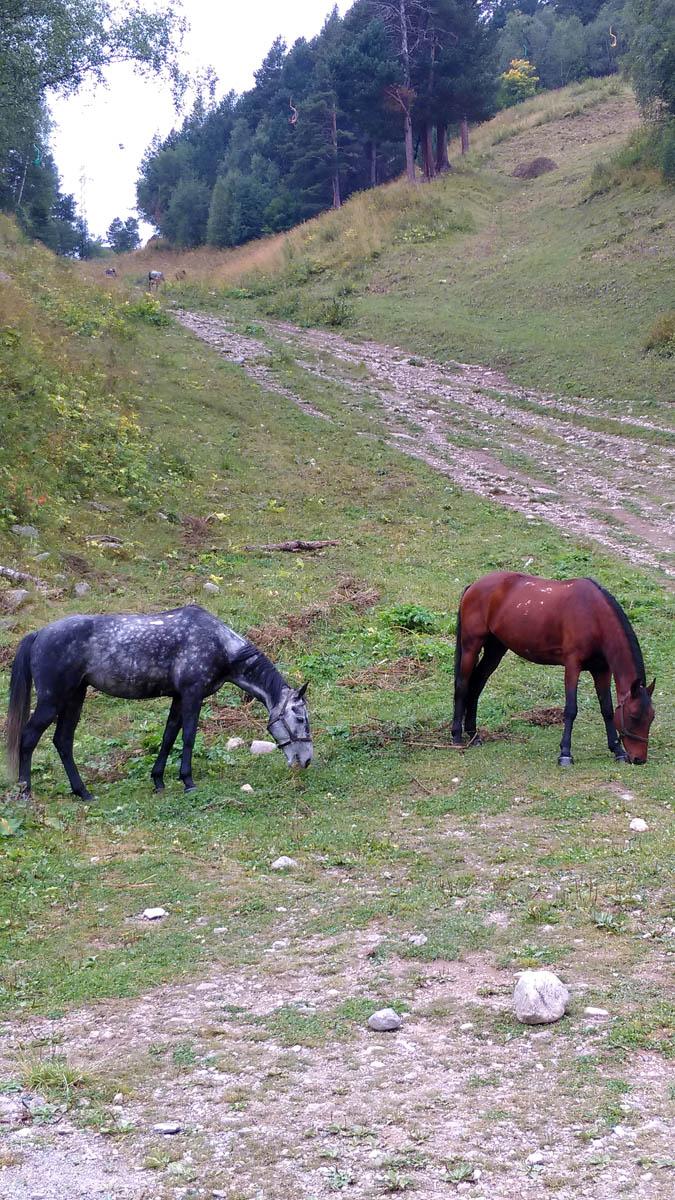 А у подножия пасутся другие лошадки, но тоже красивые)
