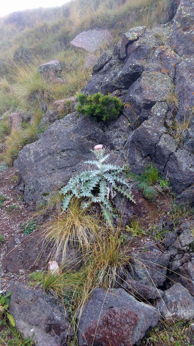 Колючая растительность на склоне Пика Терскол.