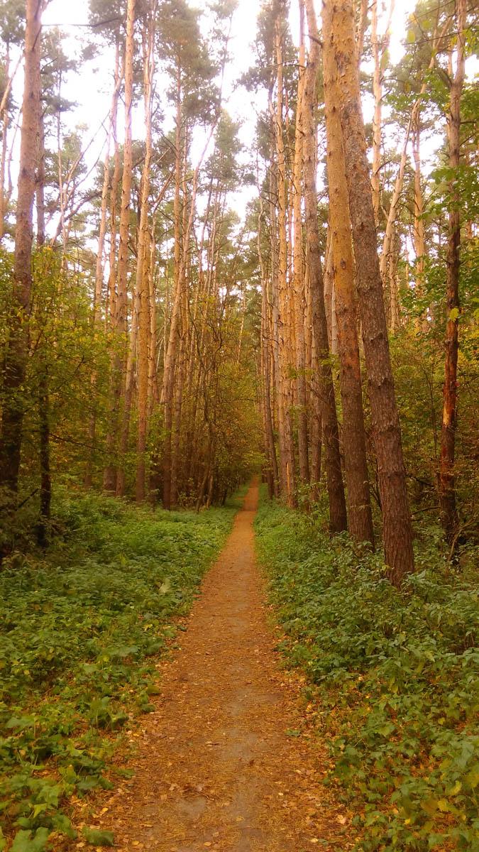 А мы идем по тропинкам леса к городу Домодедово и вокзалу...