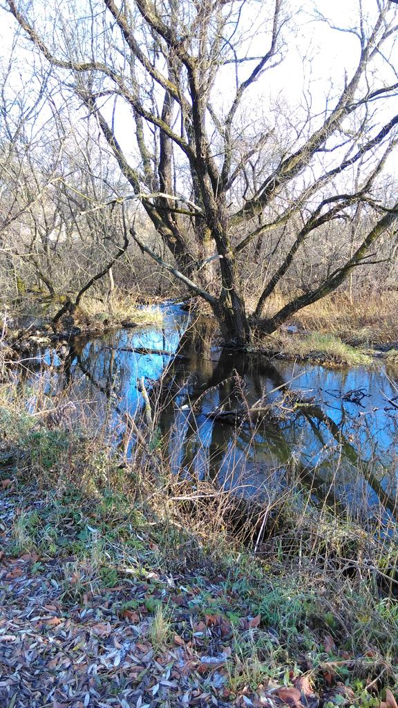 Река Гнилуша.