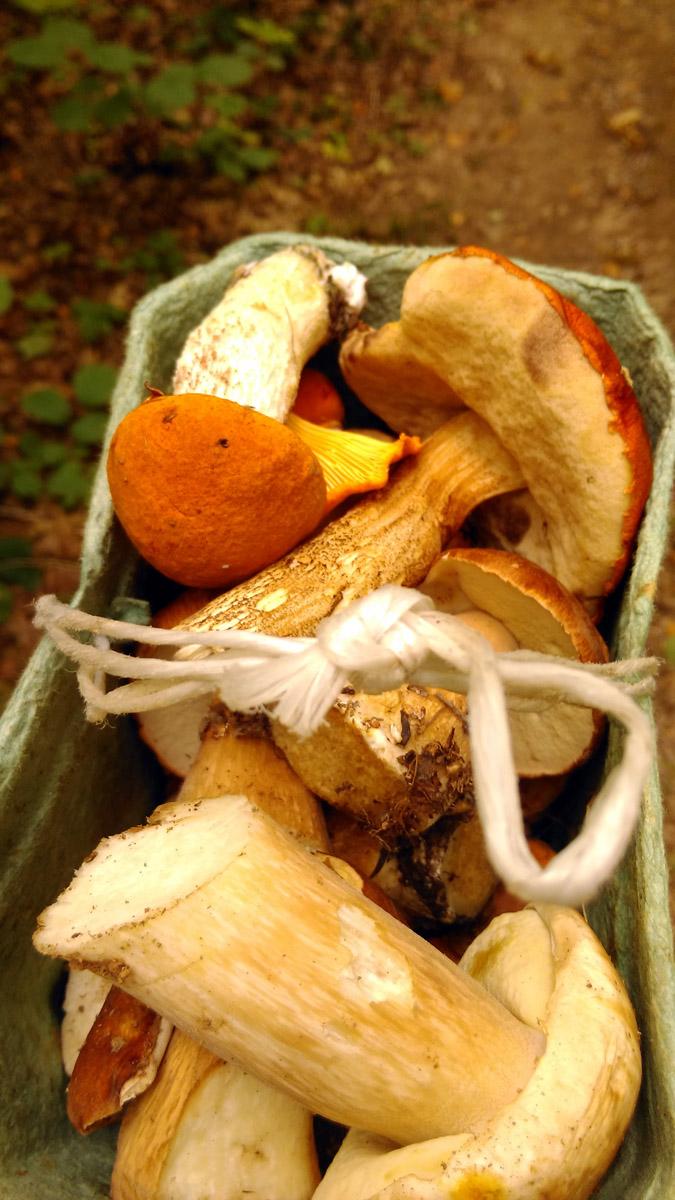 Съедобные грибочки тоже нашлись...
