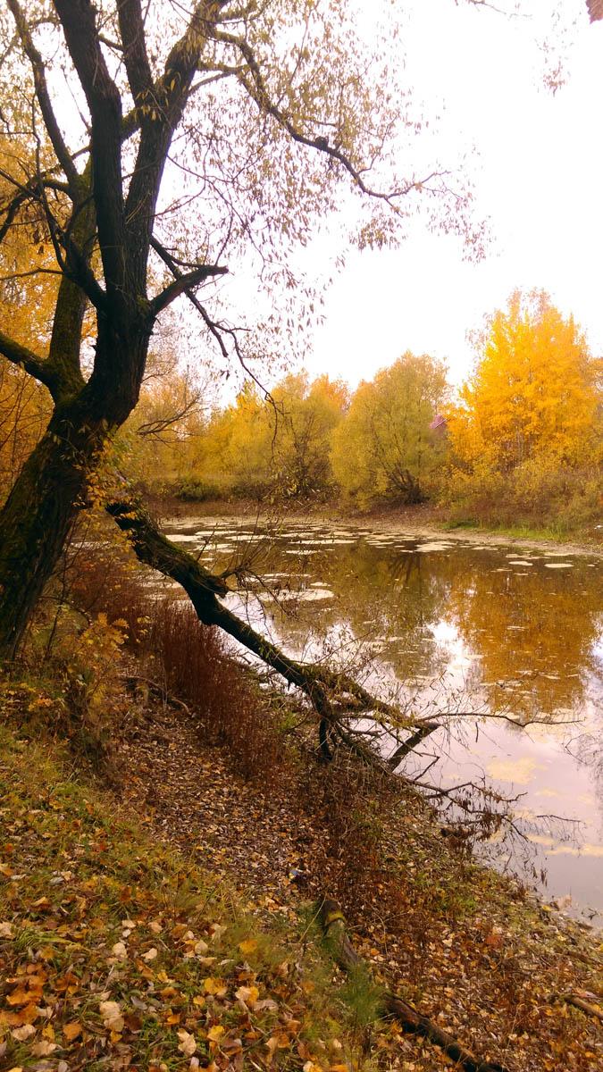 Глиняный пруд в Белых Столбах. Удивил низкий уровень воды, обычно он на метр-полтора выше.