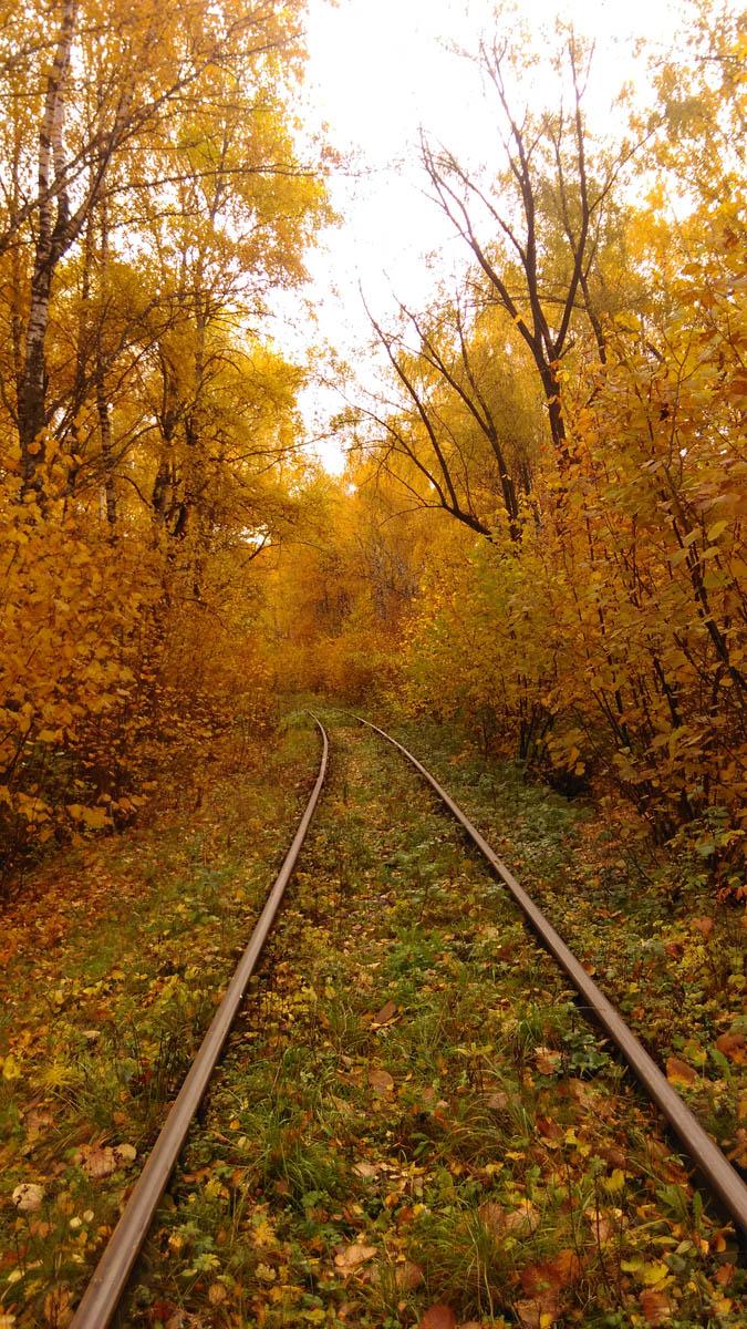 Ветка железной дороги проходит через небольшой лес.