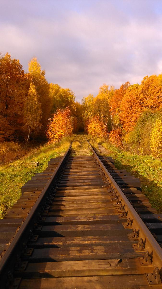 Деревянные шпалы мостика через ручей.