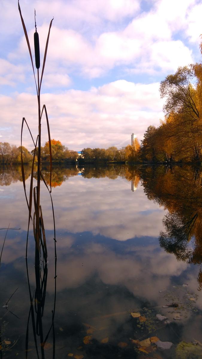Красивый прудик около деревни Шахово Домодедовского городского округа.