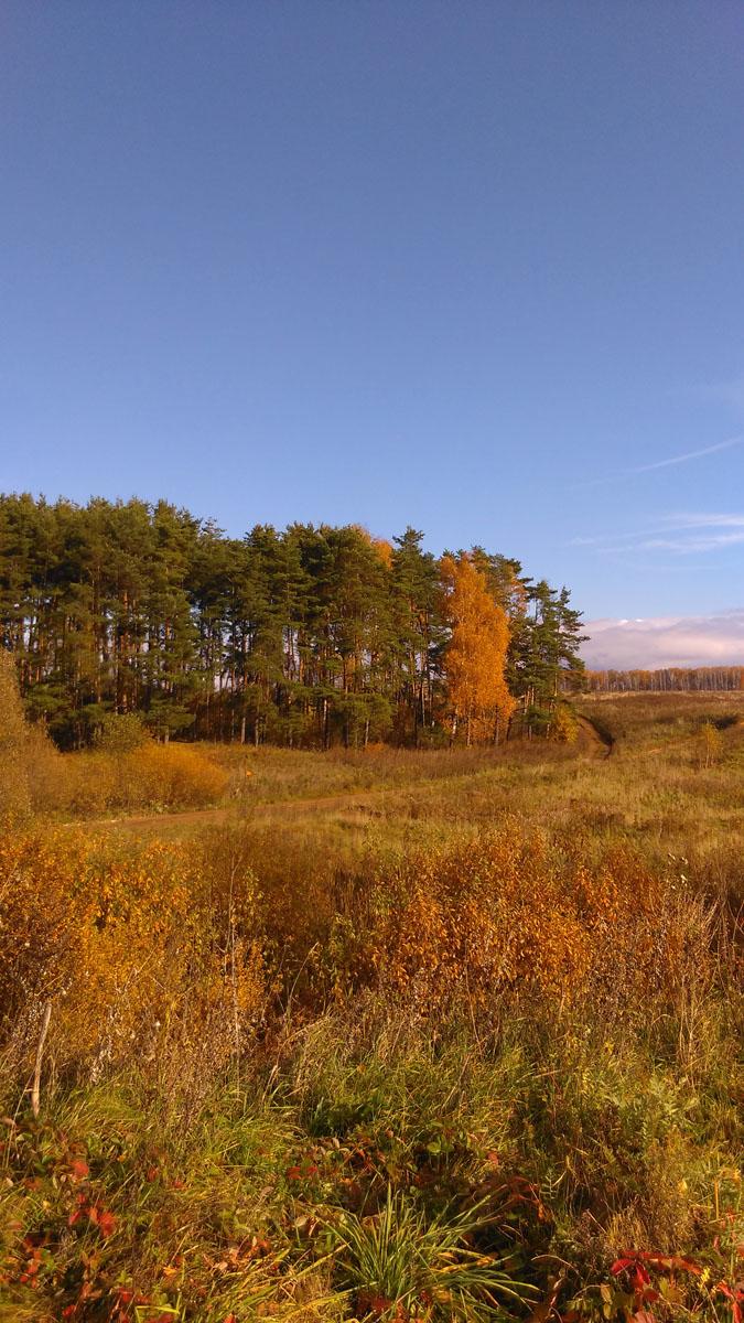 А еще немного дальше поля и небольшой сосновый лесок.