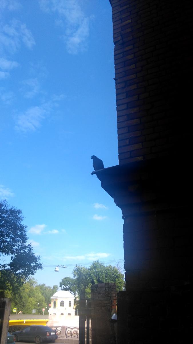 Напоследок, голубь облюбовавший дворик между домом построенных архитектором Виктором Александровичем Шретером.