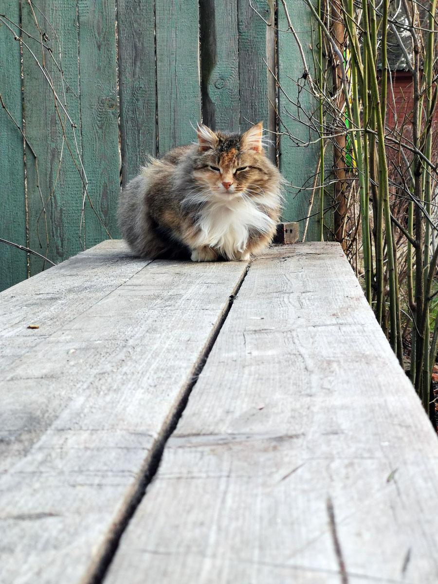 Еще одна котейка греется на солнышке на верстаке.