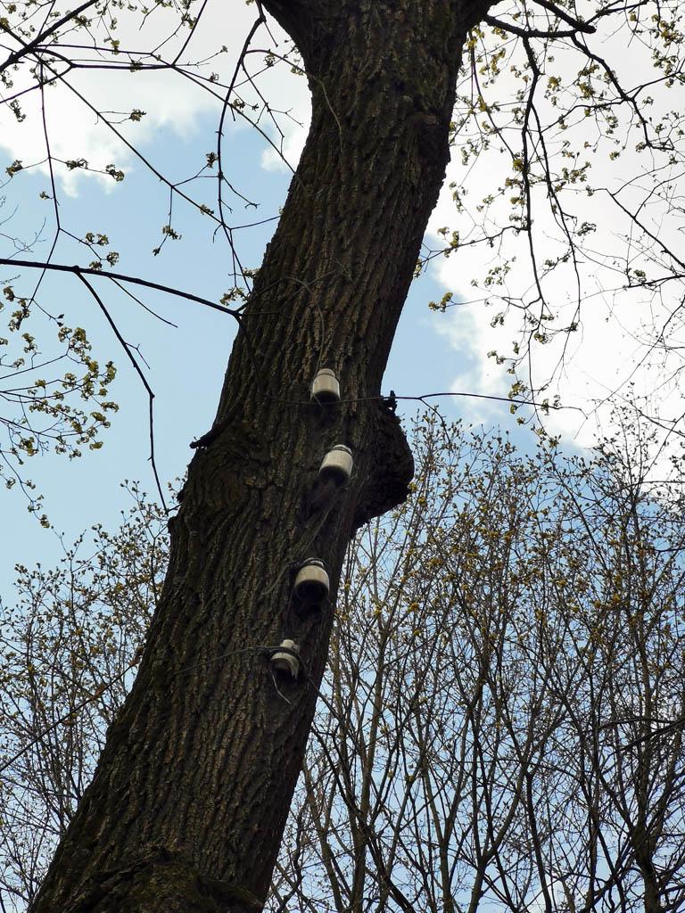 А здесь изоляторы прикручены прямо на дереве.