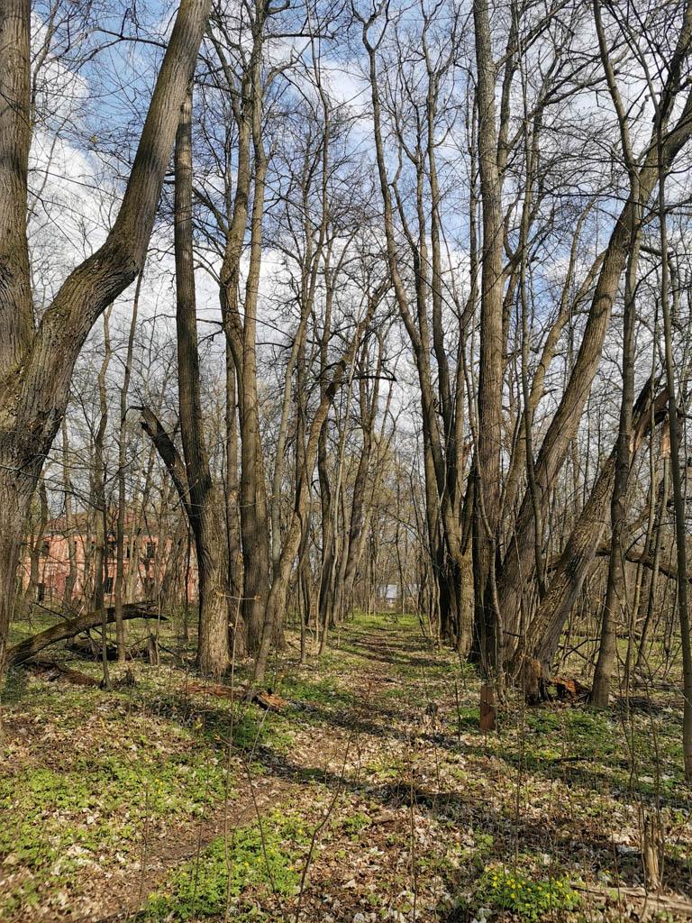 Еще одна аллея и главный дом за деревьями....