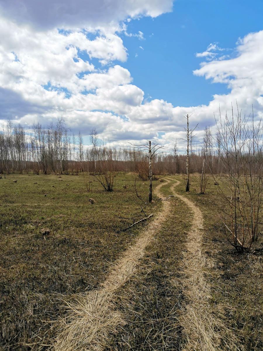 После Липитино, перейдя А-108 «Московское большое кольцо», держу направление через поле... Точнее, на карте оно обозначено, как поле, но уже давно заброшено и заросло молодыми деревцами...