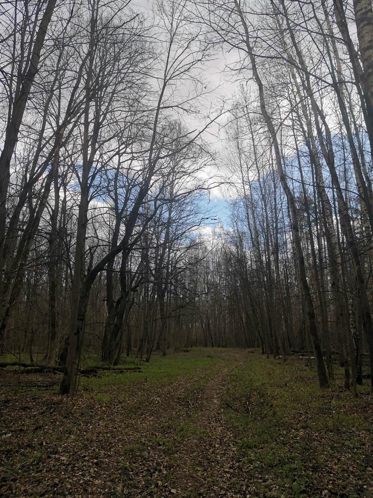 А затем через полноценный лес, по просеке...