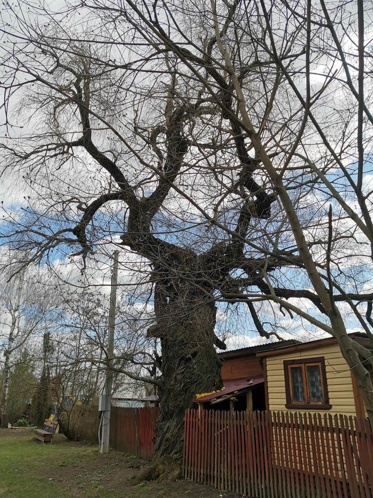 Деревня Сотниково. Уютная такая. Здесь старинные домики чередуются с новыми... Много деревьев и каскадные пруды.