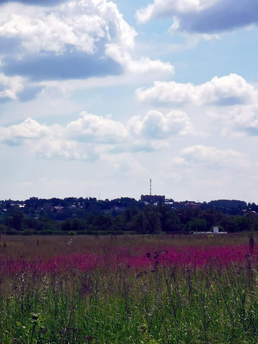 Малиновое облако полевых цветов....