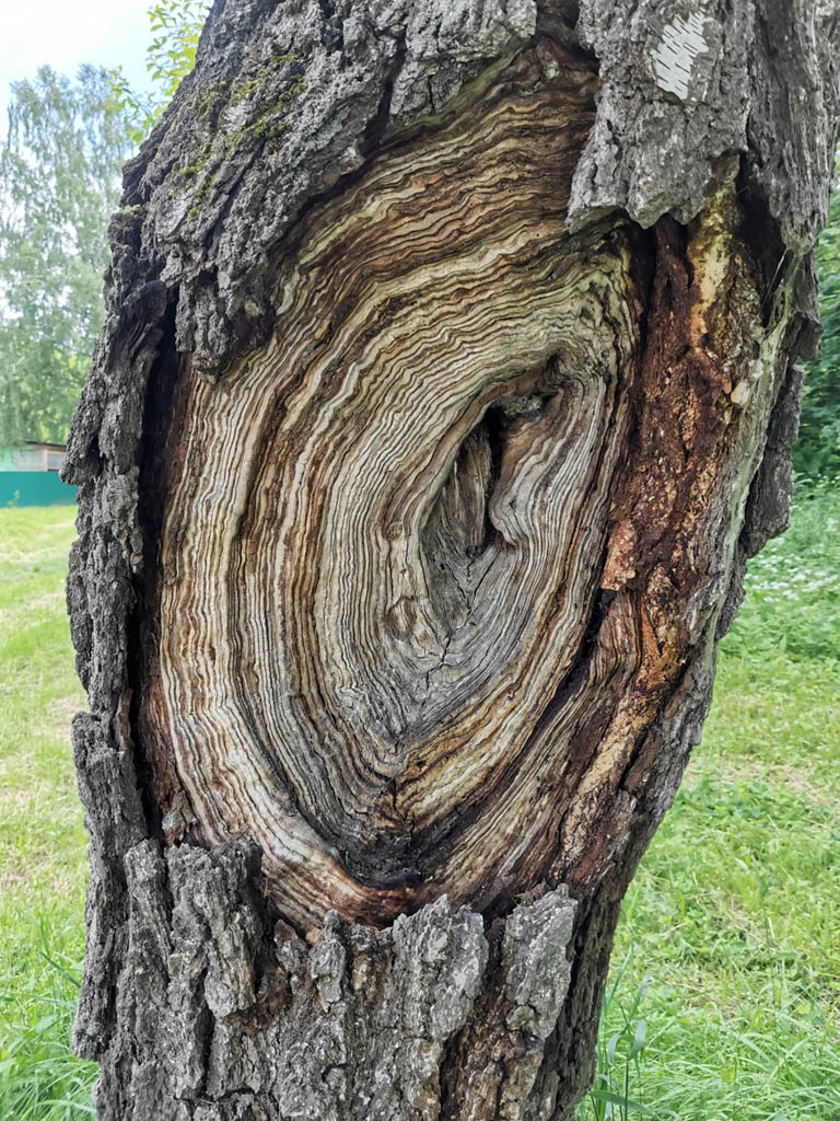 Интересное дерево...