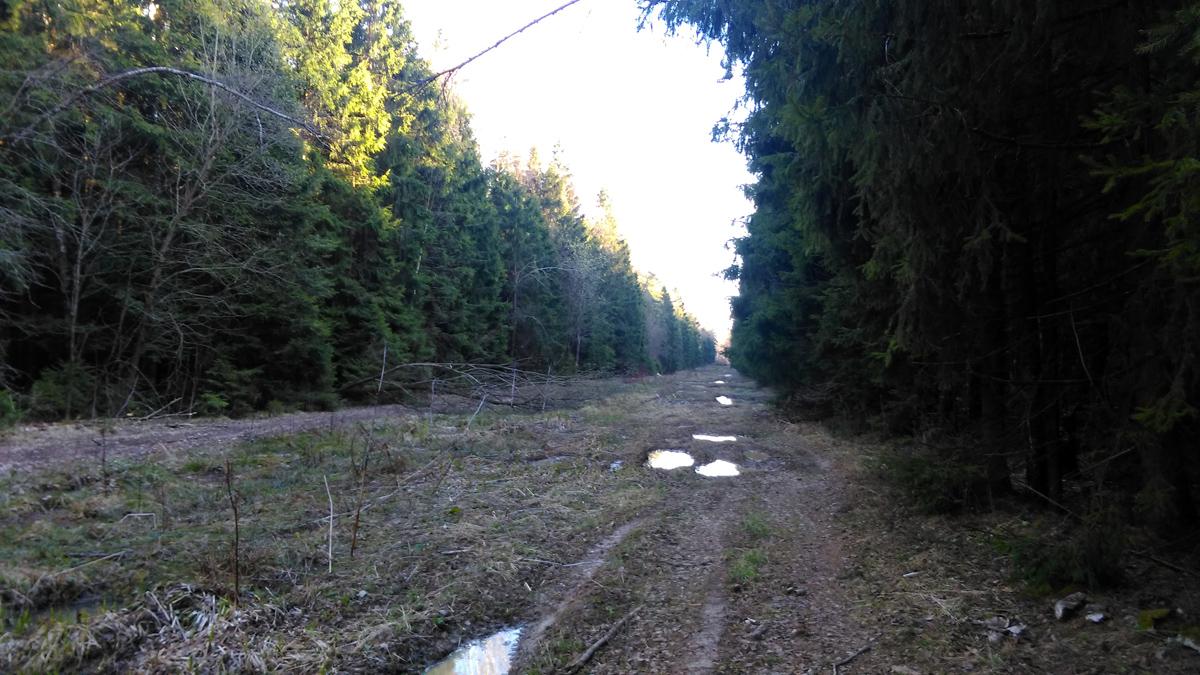 В том числе, через охот.хозяйство по просеке, которая вырублена при строительстве водовода Колычево-Котляково-Жеребятьево.