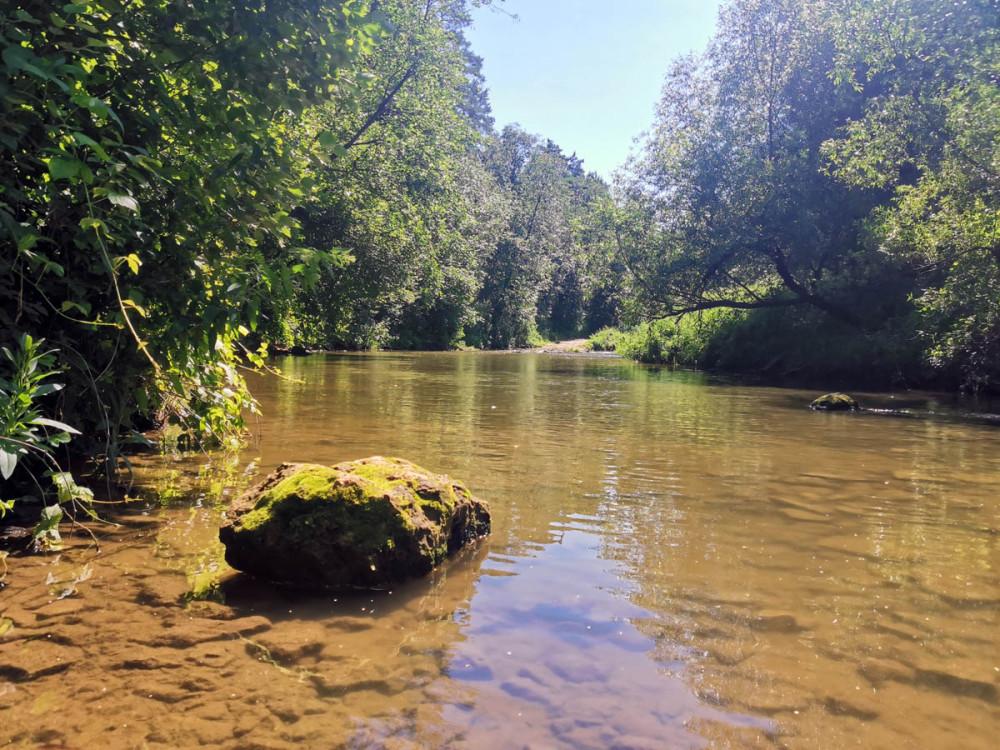 Река Рожайка. В этом году несколько раз ходил вдоль ее берегов...