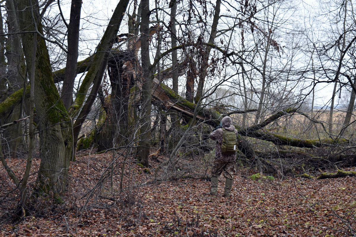 Парк давно не очищали, как от кустов и молодняка, так и от бытового мусора. Многие старые деревья повалены.