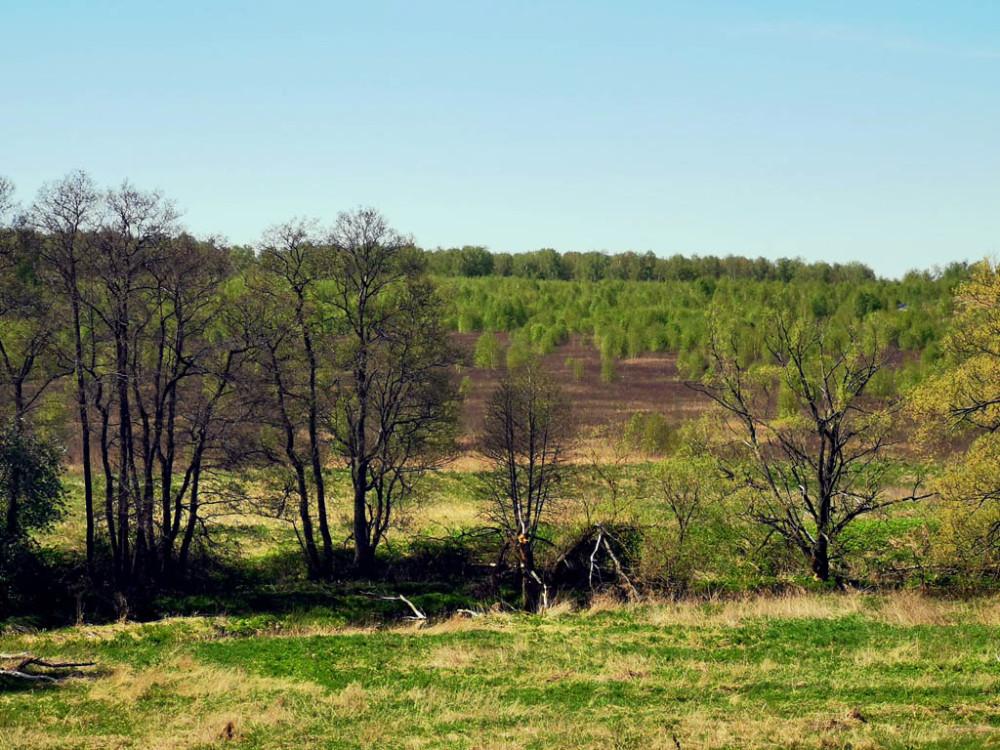 На противоположенном берегу Каширки поле заросшее молодыми деревцами. Фото не передает ощущения, что на это поле приземлилось зеленое облачко. Точнее много зеленых облачков...