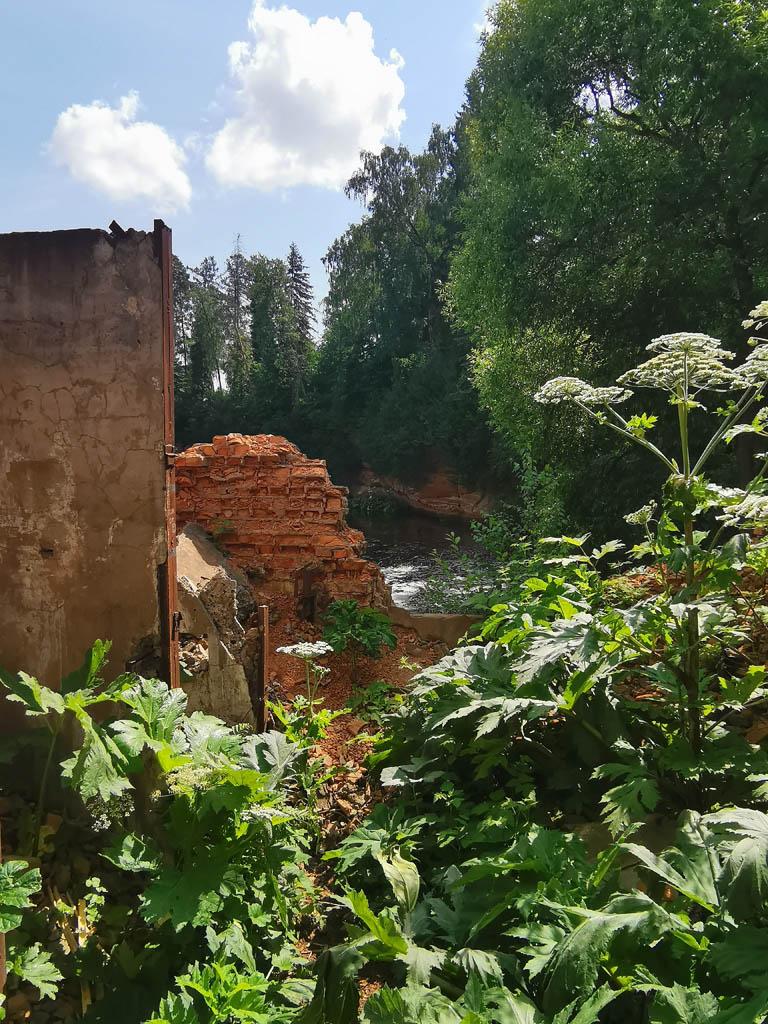 Руины и борщевик....