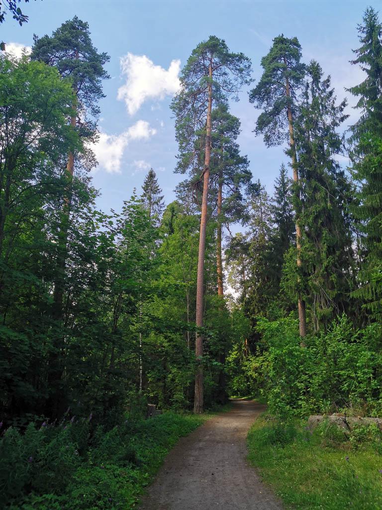 А мы после небольшого привала продолжаем путь по левому берегу реки Оредеж через Лазаревский лес