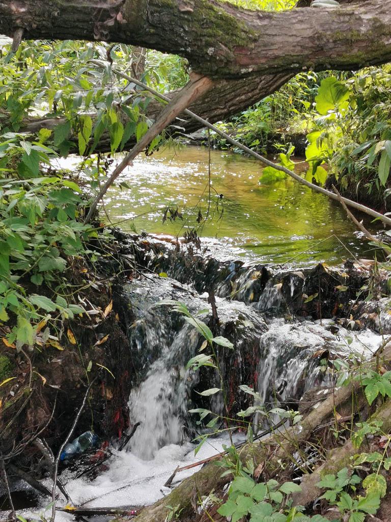 Ручей с небольшим водопадиком впадает в Рожайку