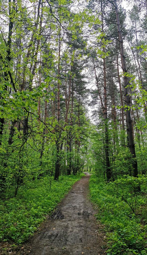 Идем по лесной тропинке к полям за которыми расположены водоемы...