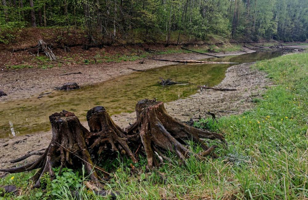 Уровень воды в пруду низкий. Короткий, хоть и сильный, дождь ситуацию не исправил. Сами знаете, какая была зима, практически, без снега. Вот и пруды наполнены водой наполовину...