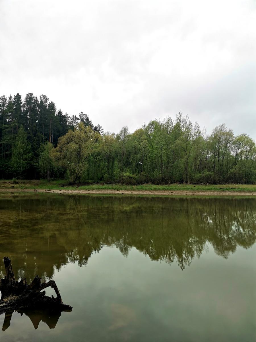 Вдоль берега и на суше и на берегу валяются пеньки с замысловатыми корягами...