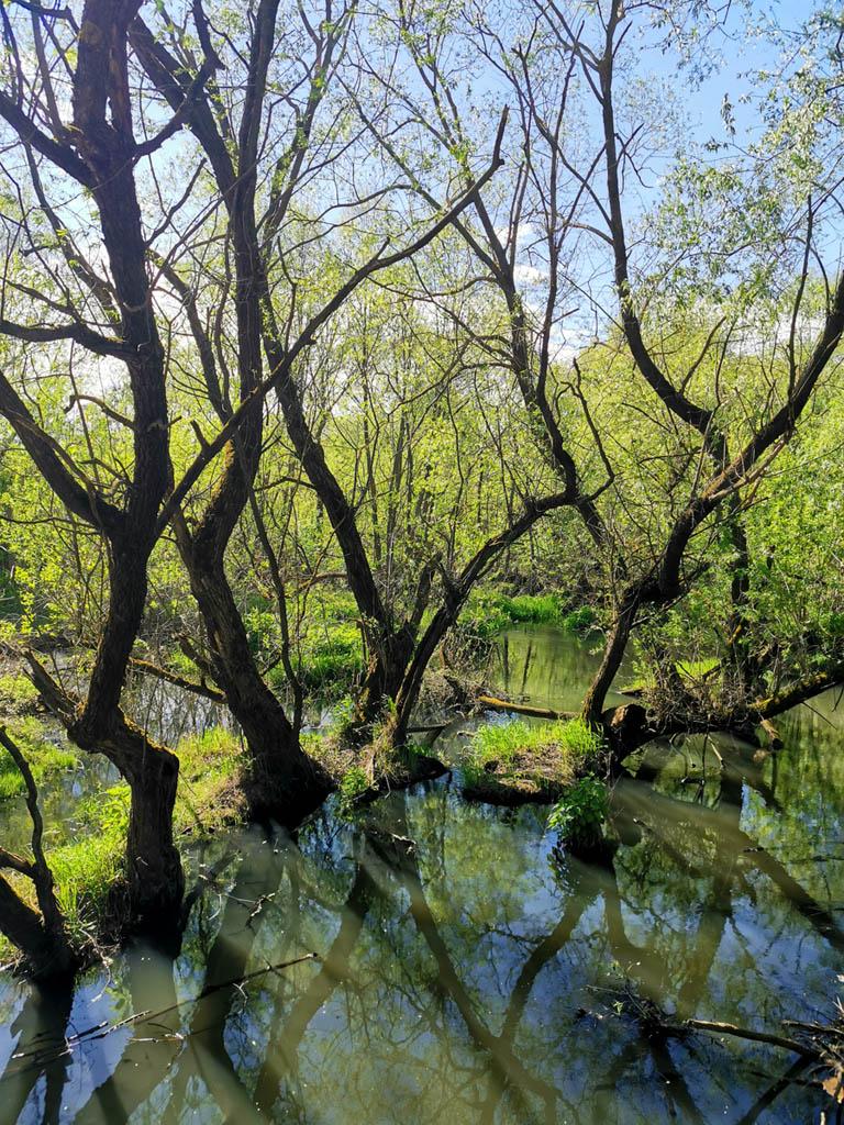 Снова переходим реку Гнилушу. Здесь она протекает через таинственный лес.. Ладно, преувеличиваю, не лес. Но от этого пейзаж не менее красив.